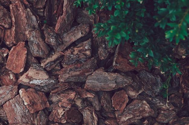 Fundo natural de pedaços marrons de lascas de madeira de casca de pinheiro