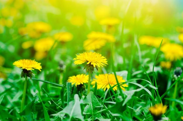 Fundo natural de primavera