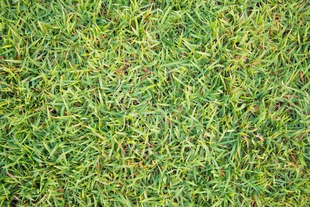 Fundo natural de textura de grama verde