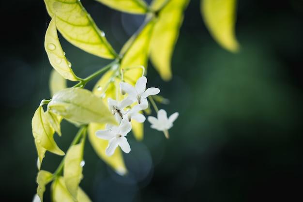 Fundo natural de verde brilhante estilo abstrato borrado de folha de plantas e pequeno mosquito na flor branca