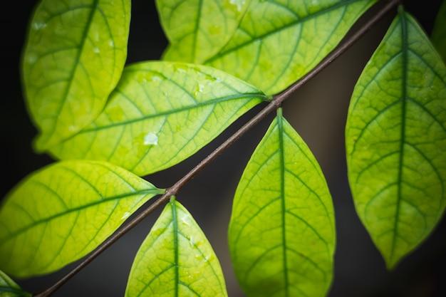 Fundo natural de verde brilhante estilo abstrato turva de folha de plantas
