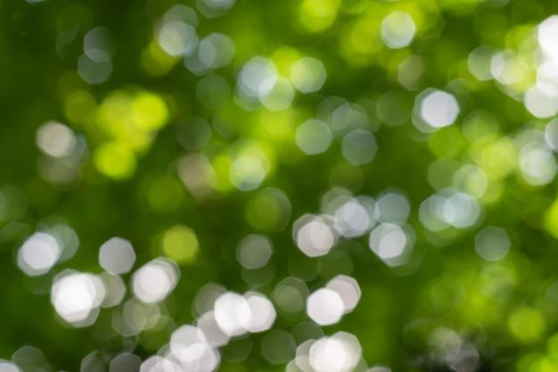 Fundo natural do bokeh com folhas, árvores e céu.