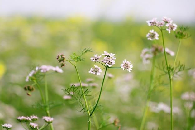 Fundo natural flor closeup