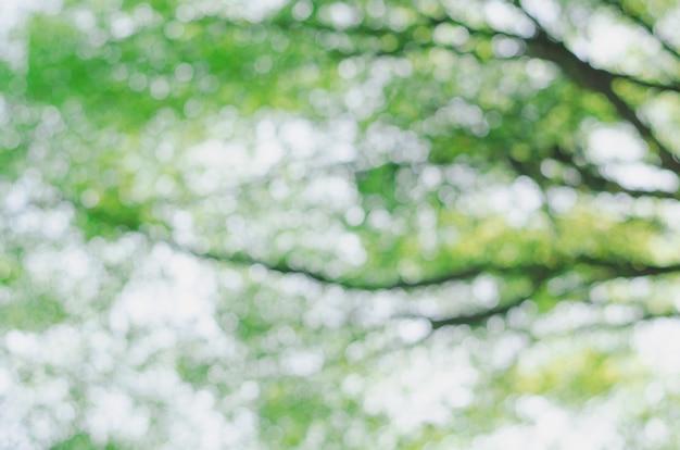 Fundo natural verde de floresta fora de foco
