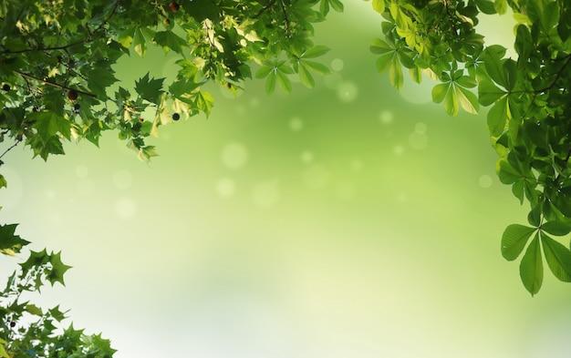 Fundo natural verde, fundo de vegetação