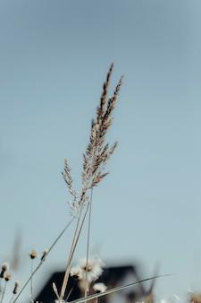 Fundo neutro de flores secas