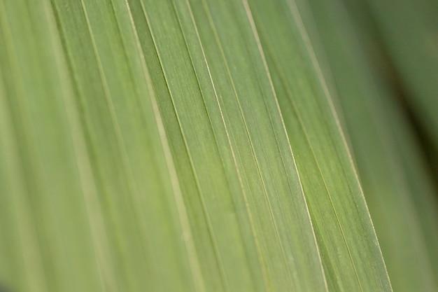 Fundo orgânico com folhas