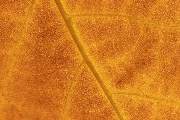 Fundo orgânico de folha laranja