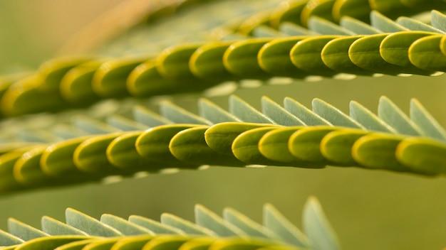 Fundo orgânico de folhas verdes