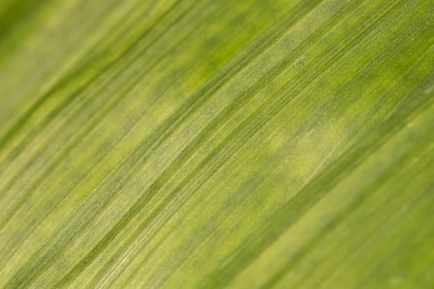 Fundo orgânico de textura de folha em close-up