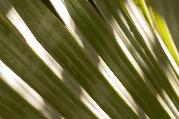 Fundo orgânico do arranjo das folhas