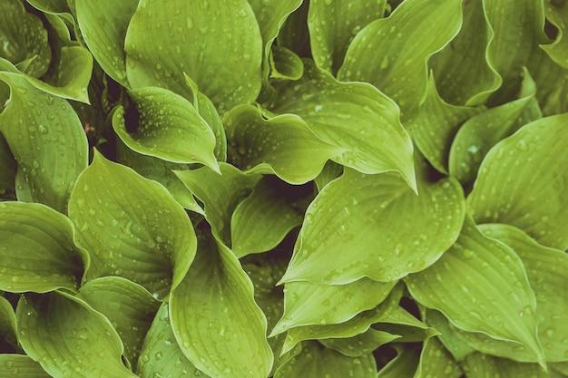 Fundo ou papel de parede natural bonito de planta frondosa - perfeito para artigos / postagens relacionados à natureza