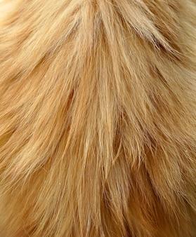 Fundo ou textura de pele de gato vermelho ruivo de cabelo comprido.