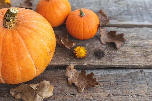 Fundo outonal. abóboras de exibição de outono outono natural em fundo de madeira. papel de parede inspirador de outubro ou setembro. mudança do conceito de alimentos orgânicos maduros, festa de halloween, dia de ação de graças