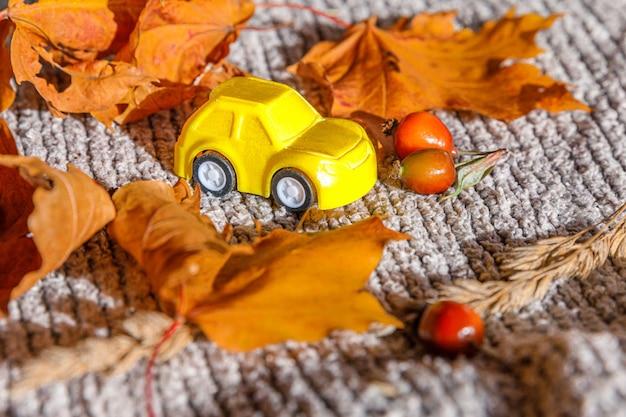 Fundo outonal. carro de brinquedo yelllow e folhas de bordo de outono laranja secas no suéter de malha cinza. espaço da cópia do banner de ação de graças. conceito de entrega de clima frio de hygge. olá, viagens de outono.