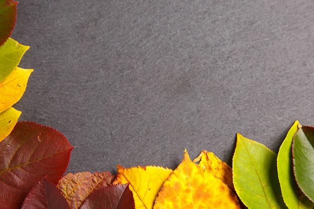 Fundo outono com folhas coloridas