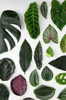 Fundo plano de folhas verdes