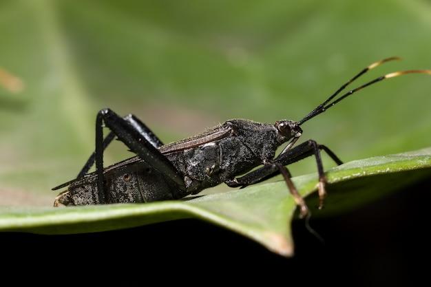 Fundo preta erro espalhador predador pernas