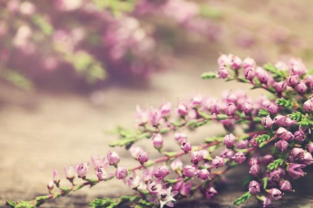 Fundo retro floral com flores e luz de verão