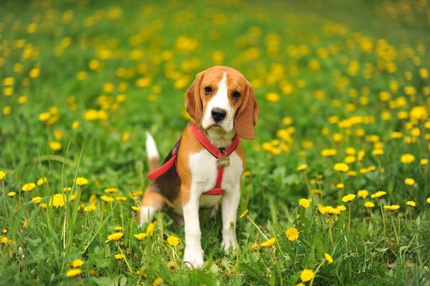 Fundo retroiluminado com retrato de cachorro