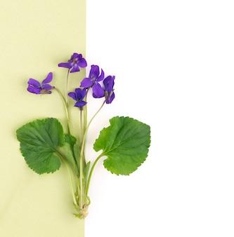 Fundo romântico vintage com um livro antigo, flores violetas contra fundo branco e espaço de cópia.