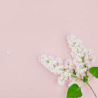 Fundo rosa com flores lilás brancas