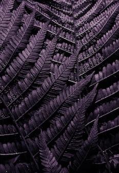 Fundo roxo. macro folha textura