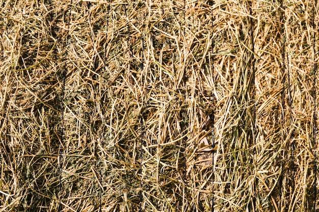 Fundo rústico com textura de fardo de alfafa no campo