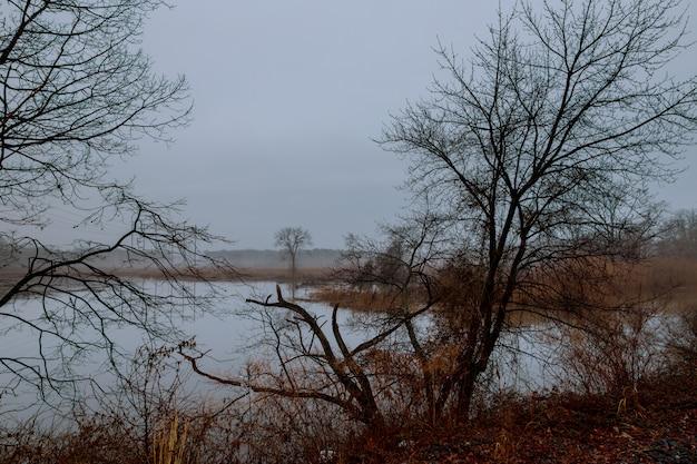 Fundo sazonal cinza mal-humorado - árvores no nevoeiro, dia chuvoso e nebuloso, pingos de chuva