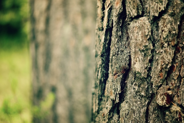 Fundo seco da casca de árvore. textura de madeira abstrata