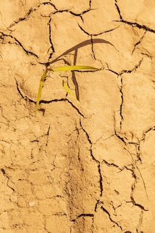 Fundo seco da textura do solo do solo de terra rachada. padrão de mosaico de solo ensolarado de terra seca