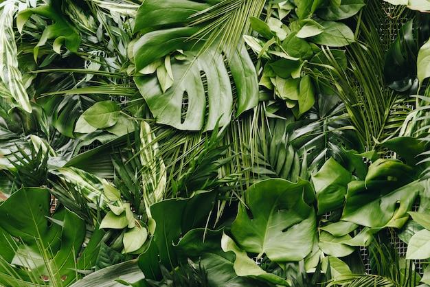 Fundo sem costura contínuo de folhas tropicais verdes luxuriantes, frescas grandes