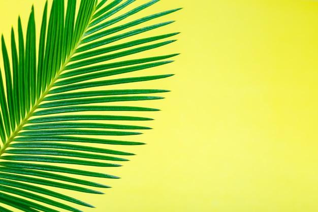 Fundo tropical com galhos de árvores de palma