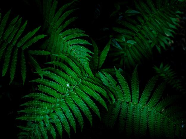 Fundo tropical das folhas, teste padrão verde do fundo.