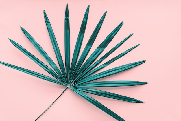 Fundo tropical de folhas de palmeira flat lay pink