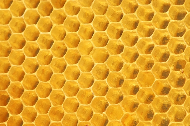 Fundo vazio da imagem do favo de mel