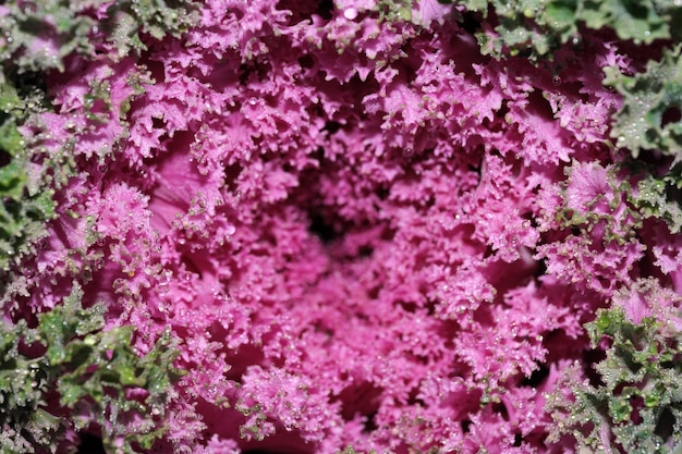 Fundo vegetal com couve-flor macro fotografia decorativa de close-up