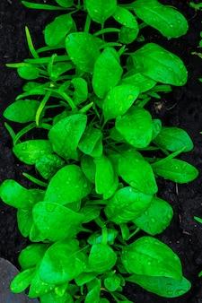 Fundo vegetal
