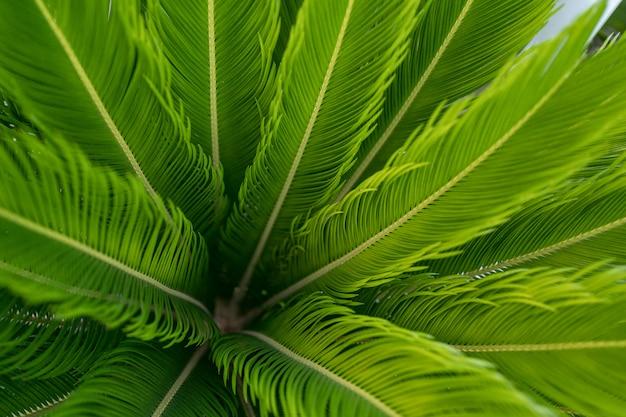 Fundo verde com folhas de palmeira, fundo natural e papel de parede