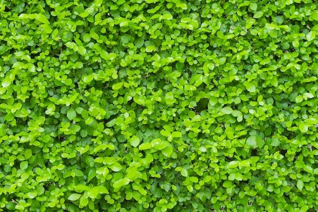 Fundo verde da folha, estação de mola.