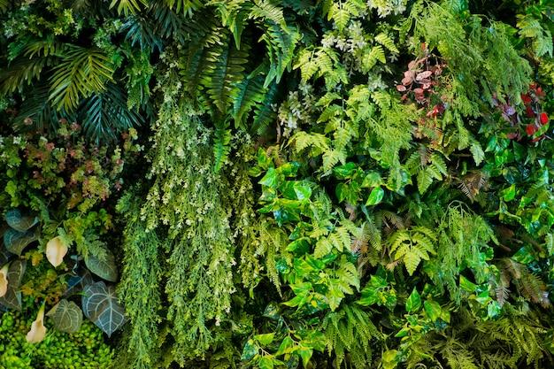 Fundo verde da parede das folhas, fundo da natureza da parede da folha,