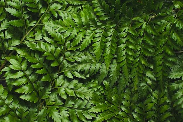 Fundo verde da samambaia de leatherleaf.