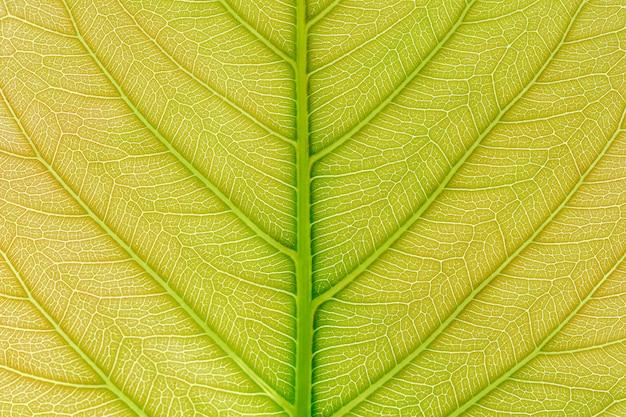 Fundo verde da textura do teste padrão da folha com luz atrás.