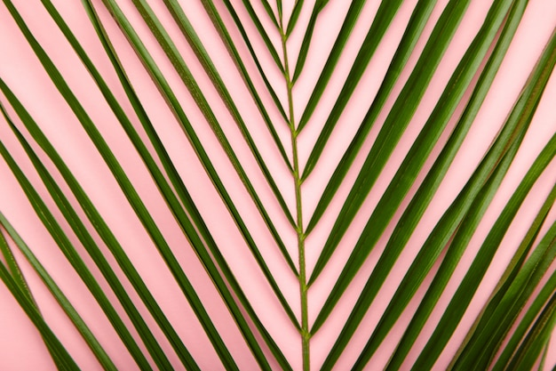 Fundo verde das folhas de palmeira com espaço da cópia. vista do topo