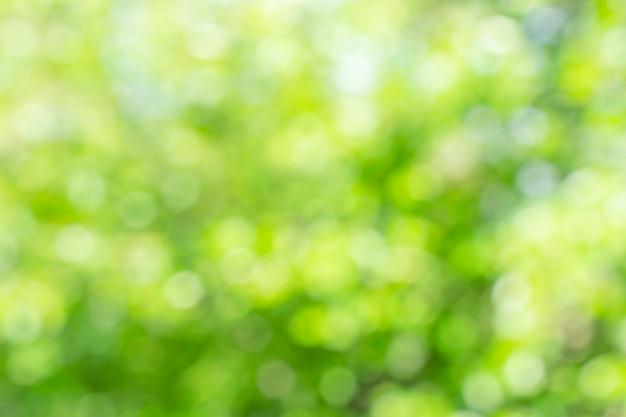 Fundo verde desfocado ensolarado da natureza, elemento abstrato do efeito es do bokeh para seu projeto.