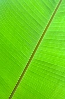 Fundo verde em folha de palmeira tropical.