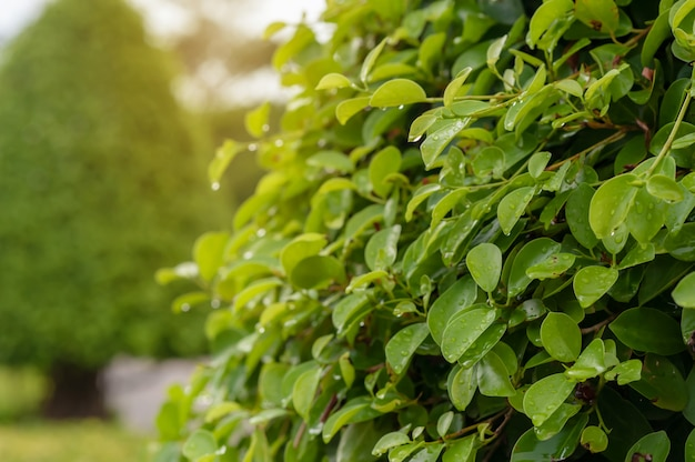 Fundo verde folhagem