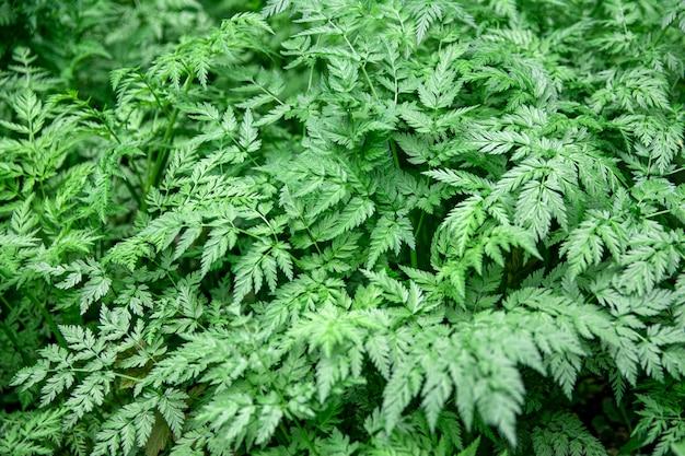 Fundo verde folhas