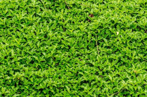 Fundo verde fresco no jardim