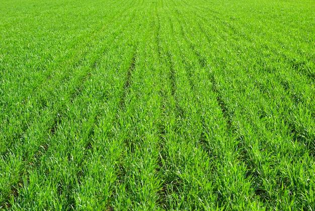 Fundo verde gramado